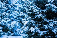 Kerstboom 3 van de de wintersneeuw Stock Foto's