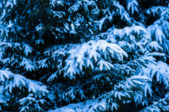 Kerstboom 4 van de de wintersneeuw Stock Foto