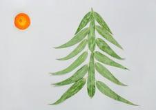 Kerstboom van eucaliptusbladeren dat en mandarin wordt gemaakt Vlak leg Het concept van de vakantie De ruimte van het exemplaar i stock fotografie