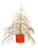 Kerstboom zonder naalden Stock Foto