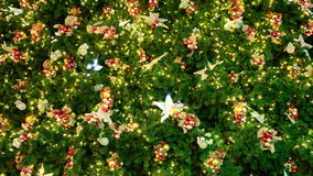 Kerstboomdecoratie Royalty-vrije Stock Foto