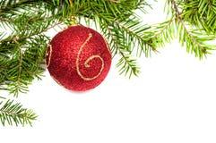 Kerstboomtak met rode bal Stock Afbeeldingen