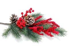 Kerstboomtak met rode bessen stock afbeeldingen