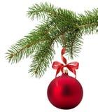 Kerstboomtak met rode die bal op witte backgr wordt geïsoleerd Stock Foto