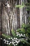 Kerstboomtak op hout Stock Foto