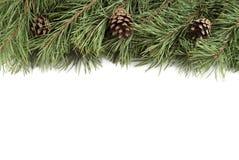 Kerstboomtakken en builen op een witte achtergrond met copyspace Royalty-vrije Stock Fotografie