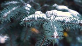 Kerstboomtakken in het sneeuwclose-up Spartakken met sneeuw in de wind in Park, close-up worden behandeld dat Takken van stock videobeelden