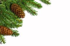 Kerstboomtakken met kegels op witte achtergrond worden geïsoleerd die Stock Foto's