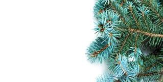 Kerstboomtakken op witte achtergrond worden geïsoleerd die Uitstekende CH Royalty-vrije Stock Fotografie