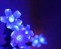 Kerstkaart - Blauw Behang: Voorraadfoto's Stock Afbeelding