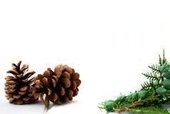 Kerstkaart met denneappels en nette takken Stock Foto