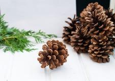 Kerstkaart met denneappels en nette takken Stock Afbeeldingen