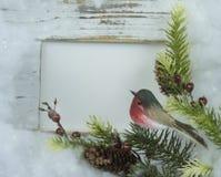 Kerstkaart met kader, vogel, tak en pijnboomnoten stock foto's