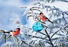 Kerstkaart natuurlijk landschap met twee vogelgoudvink op een Fe royalty-vrije stock afbeelding