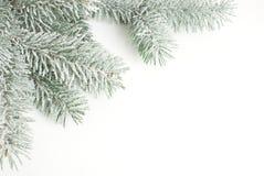 Kerstkaart, tak in de sneeuw Royalty-vrije Stock Fotografie