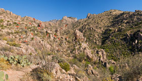 Kerstman Catalina Mountains Stock Afbeeldingen