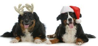 Kerstman en de honden van Rudolph Royalty-vrije Stock Foto