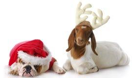 Kerstman en Rudolph Stock Foto