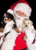Kerstman met twee puppy Stock Foto's