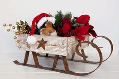 Kerstman Piggy Stock Fotografie