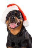 Kerstman Rottweiler Royalty-vrije Stock Afbeeldingen