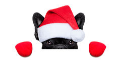 Kerstmanhond Royalty-vrije Stock Foto