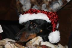 Kerstmanhond Royalty-vrije Stock Foto's