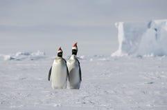 Kerstmis in Antarctica Royalty-vrije Stock Foto
