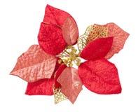 Kerstmis bloemen royalty-vrije stock afbeelding