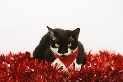 Kerstmis Cat2 Stock Afbeeldingen