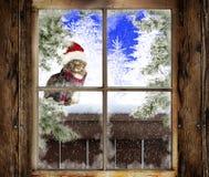 Kerstmis Cat Sitting Outside stock fotografie