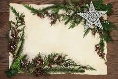Kerstmis Cedar Cypress Border Stock Fotografie