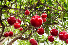Kerstmis, de decoratie van de Nieuwjaarboom met rode ballen Royalty-vrije Stock Afbeeldingen