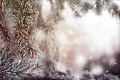 Kerstmis, de winterachtergrond met ijzige pijnboomboom Mooie seizoengebonden achtergrond Royalty-vrije Stock Afbeelding