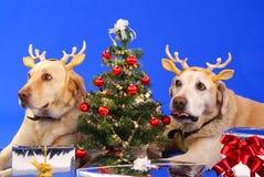 Kerstmis dog3 Stock Afbeelding