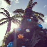 Kerstmis in Hawaï Stock Foto