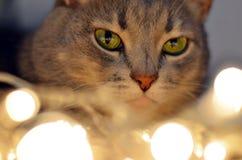 Kerstmis het gloeien kat Stock Foto