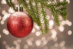 Kerstmis het rode bal hangen op een pijnboom echte tak Royalty-vrije Stock Foto's