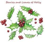Kerstmis Holly Leaves en Rode Bessenwaterverf Hand het Schilderen Boeket Botanische Tekening Illustratie voor groet Stock Foto