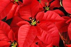 Kerstmis nam achtergrond toe Royalty-vrije Stock Fotografie