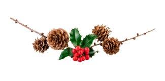 Kerstmis organische samenstelling met hulstbessen en larikskegels Royalty-vrije Stock Fotografie