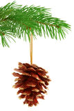 Kerstmis Pinecone Royalty-vrije Stock Foto's