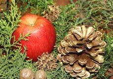 Kerstmis rode appelen als achtergrond en groene pijnbomen Stock Afbeelding