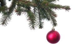 Kerstmis rode bal op de groene geïsoleerde tak Stock Foto's