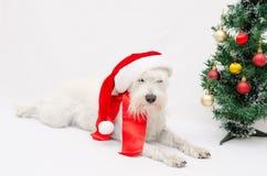Kerstmis schnauzer Royalty-vrije Stock Foto's