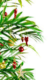 Kerstmis van de palm Stock Foto's