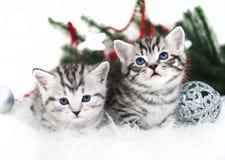 Kerstmis van het twee katjes nieuwe jaar Stock Afbeeldingen