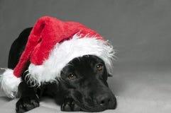 Kerstmis van Labador stock afbeelding