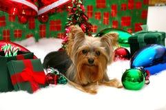 Kerstmis van Yorkie Stock Afbeelding