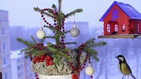 Kerstmis videolengte met de vogels stock footage